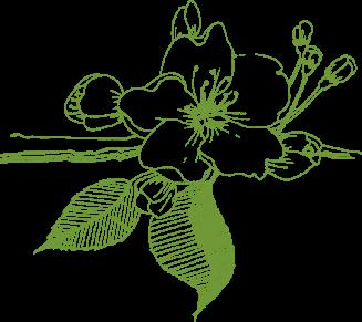 kwiat drzewka owocowe